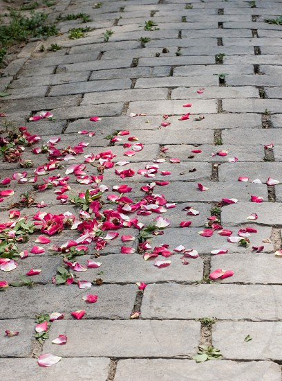 pink and white flower petals on road  photo