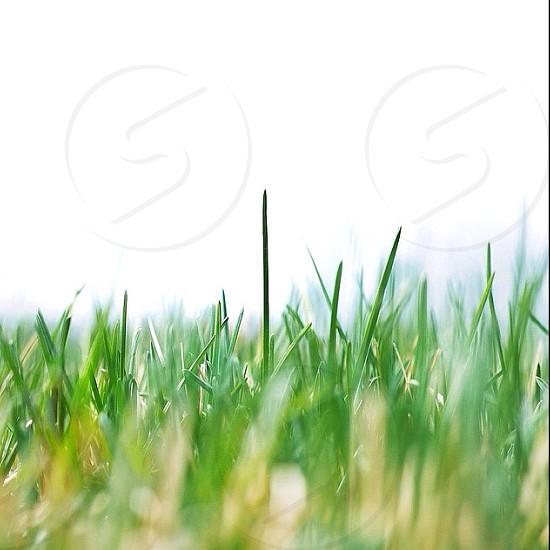 green outdoor plant in macro photo photo