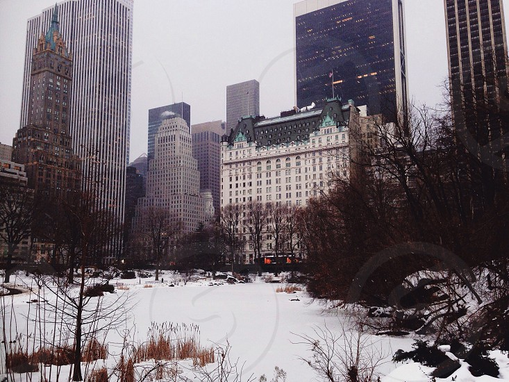 white snowy surface of a park surrounded by concrete towers and buildings photo