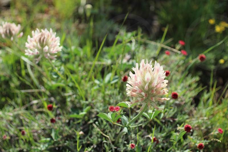 Beautiful spring wildflowers photo