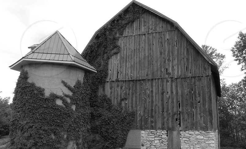 Barn in Door County WI  Barn Ivy Black and White photo