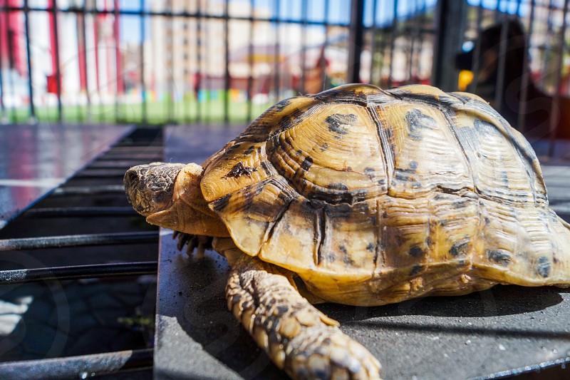 Turtle in school garden enjoying sunlight photo