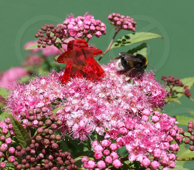 colorful figure bumblebee flower funny photo