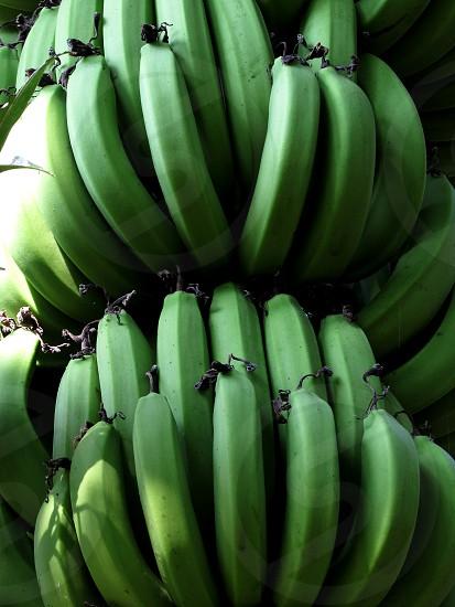 Raw Bananas  photo