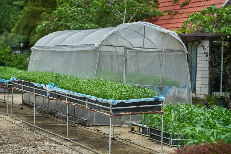 A poly tunnel and nursery beds.             photo