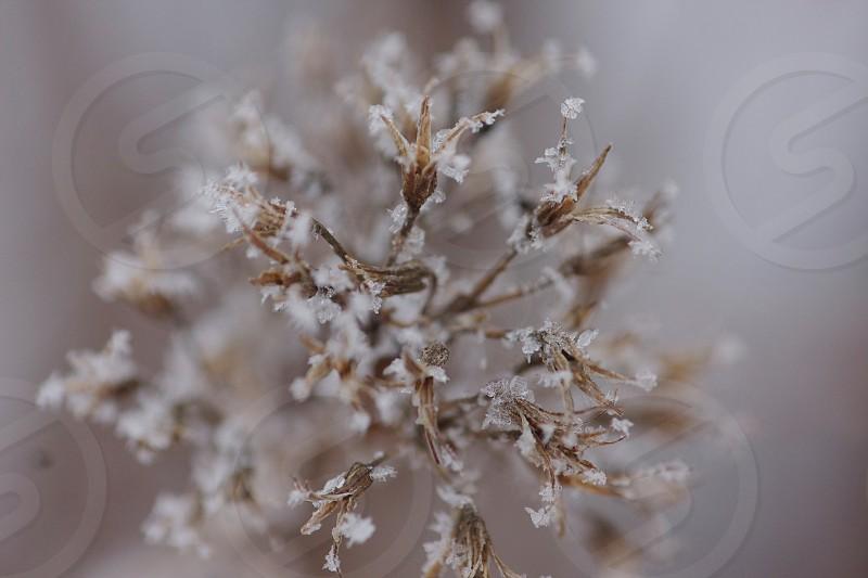 Beautiful Frozen frost  photo