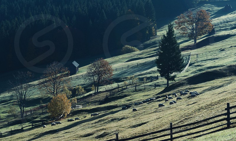 Sheep on the hill photo