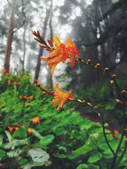 orange flower nature photography photo