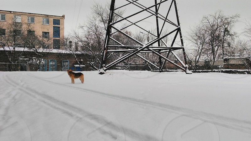 adult tan and black dog near transmission tower during winter photo