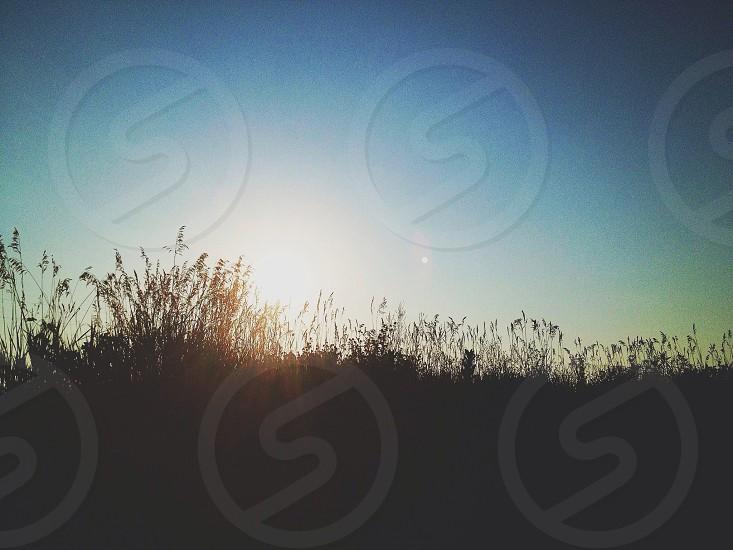 grass silhouette photo
