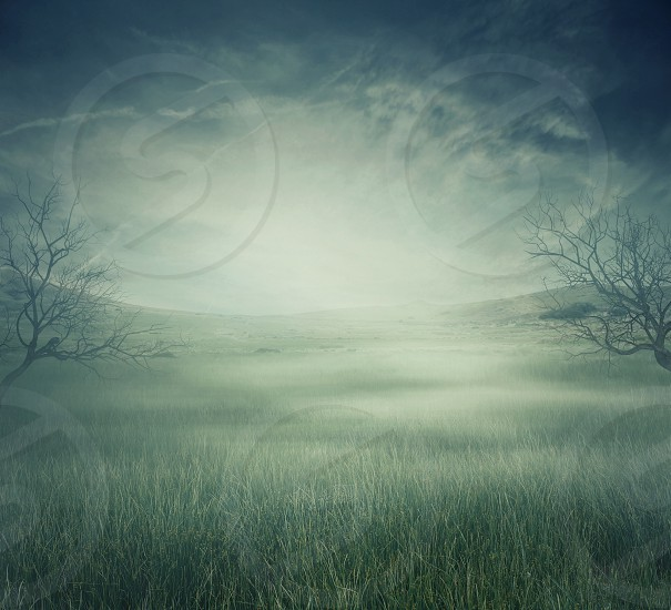 Mystycal landscape with a misty field and bare trees. Scary halloween background with copy space photo
