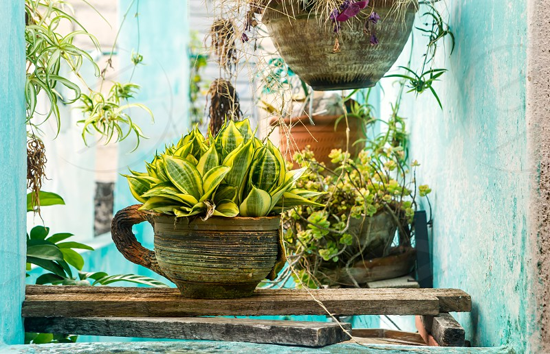 Variety of potted plants on a front porch photo