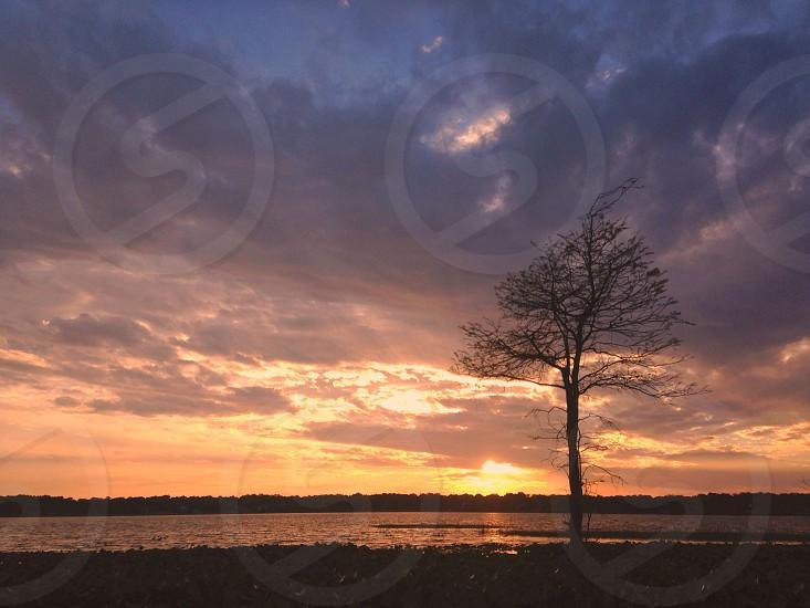 tree at sunset photography  photo