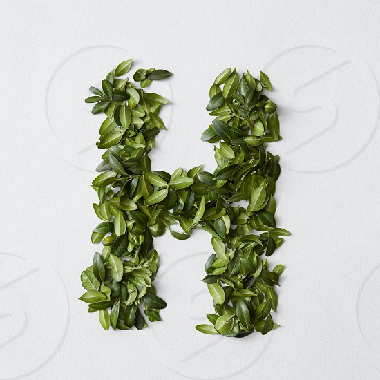 English alphabet concept. Alphabet isolated on white background. Abc letters from green leaves. Letter H represented with green leaves. Symbol H on white. photo