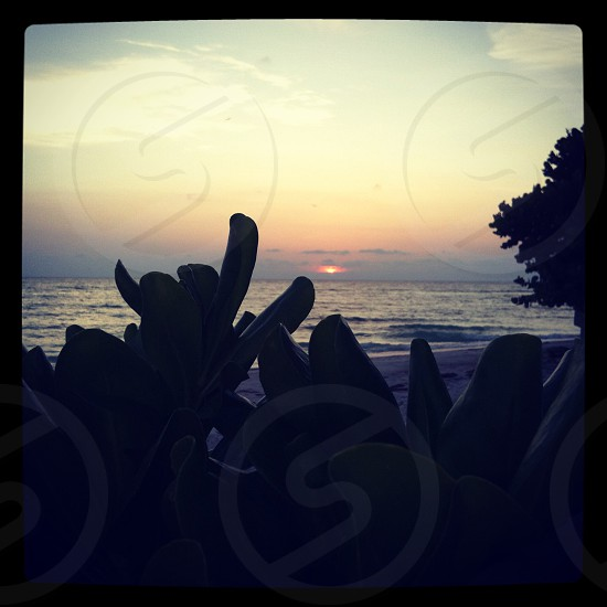 Beach sunset. Ocean view. Florida keys photo