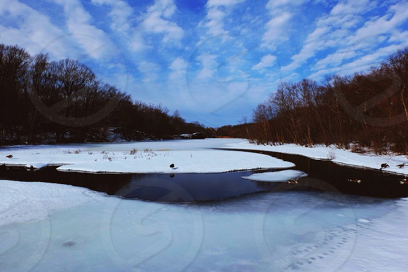 river cover by snow beside green tree view photo
