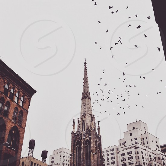 Birds flying around a church steeple on a cloudy day in New York City.  photo