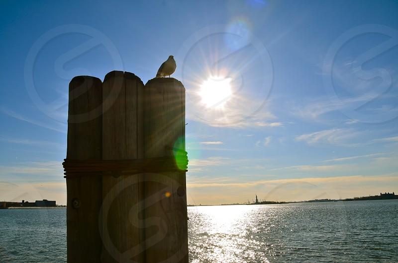 Catching the sunset. photo