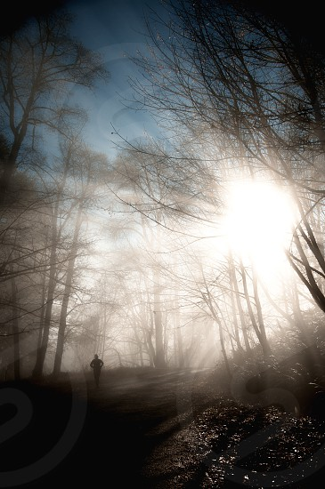 Runner on the trail with sun bursting through the fog photo