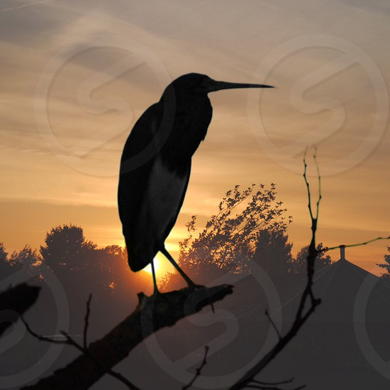 silhouette of bird perched on tree branch during yellow sunset photo