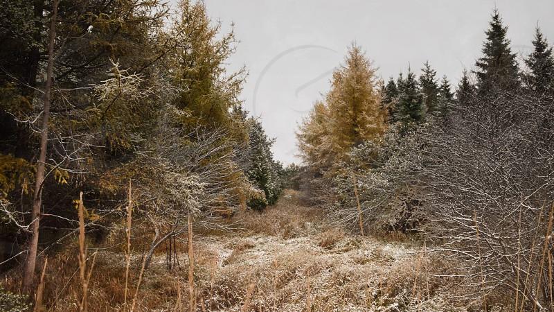 Early Snowfall creates beautiful dusting on trees photo