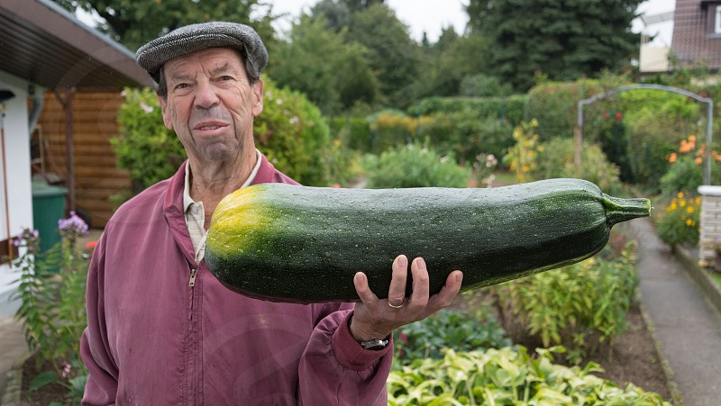 gardening courgette massive courgette big vegetable large vegetable massive vegetable old man grandad granddad garden growing vegetables organic food photo