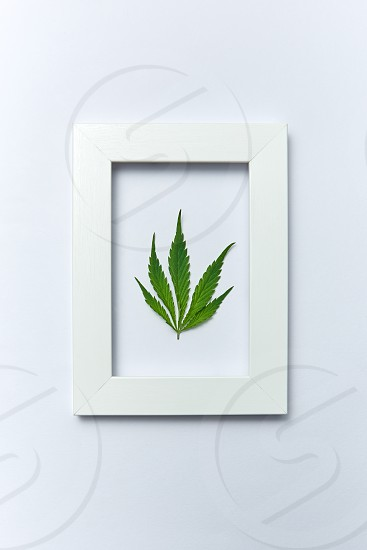 Plant handmade rectangular frame with natural green marijuana leaf on a light grey background copy space. Concept use of cannabis for medical puposes. Flat lay. photo