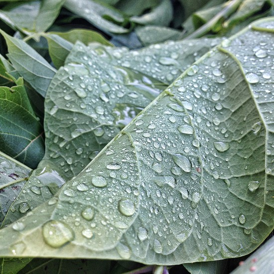 Green leaf with rain drops close up photo photo