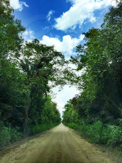 Florida Everglades Dirt Road Gators blue sky clouds path  photo