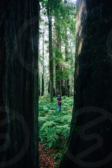 Photographer in the redwoods photo