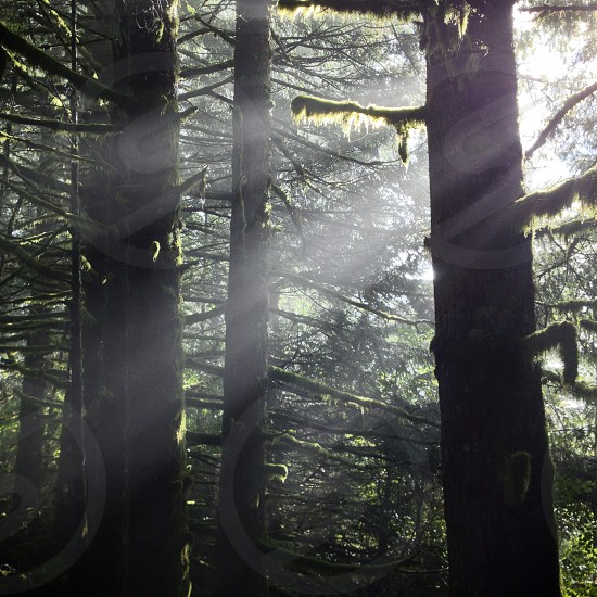 Typical Pacific Northwest forest. photo