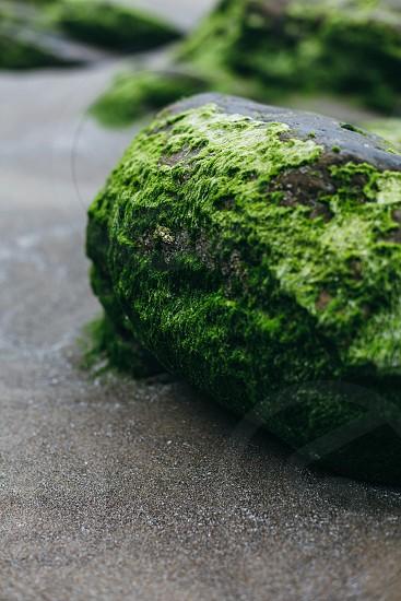 Oregon Beach Moss photo