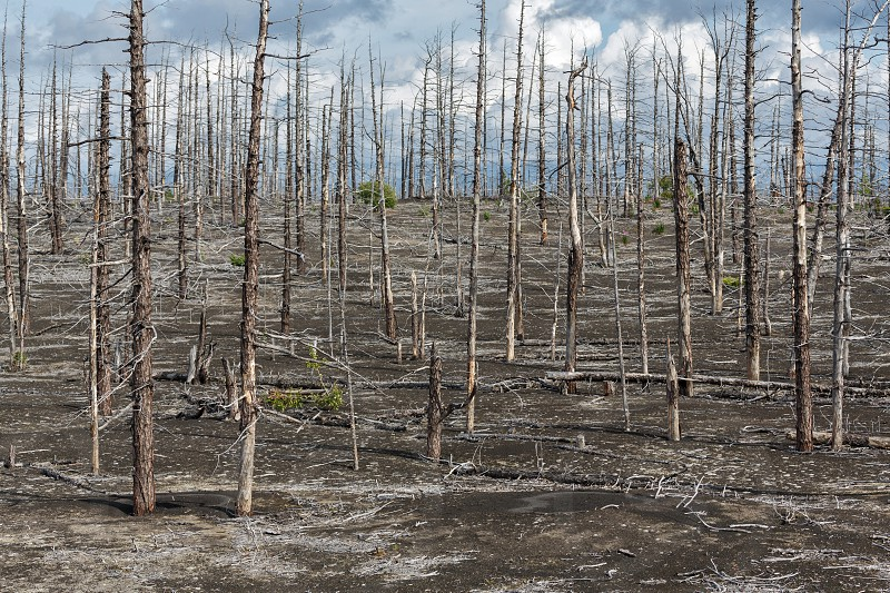 Lifeless desert landscape of Kamchatka: Dead wood (Tolbachik Volcano lava field). Far East Russia Kamchatka Peninsula. photo