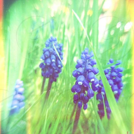 blue berries photo