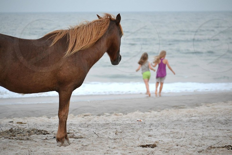 Horse observing children playing on the beach. photo