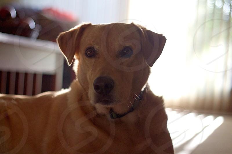 Hi...I am Tucker photo