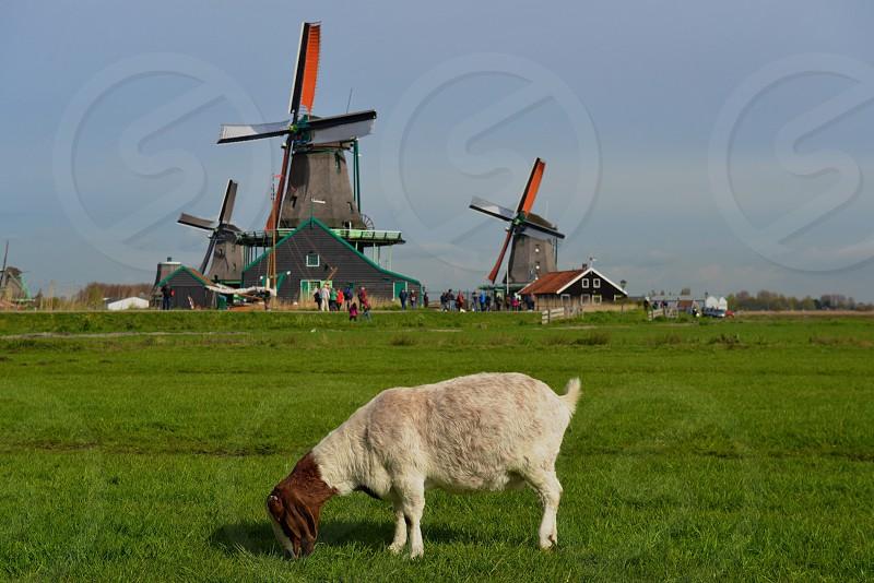 Signature Dutch landscape in the Netherlands photo