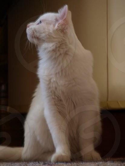I love my cat photo