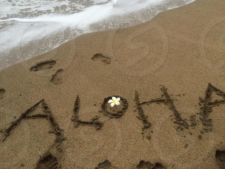white plumeria on the seashore photo