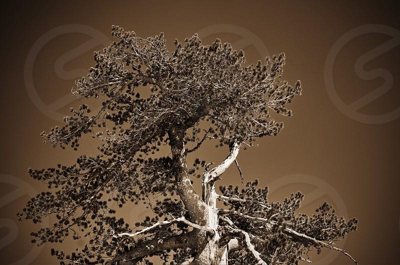 Amazing Tree photo
