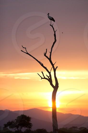 safari africa wild sunset sun night mountains tree photo