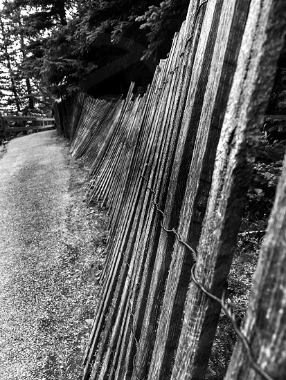 grayscale photo of pathway near wood fence and trees photo