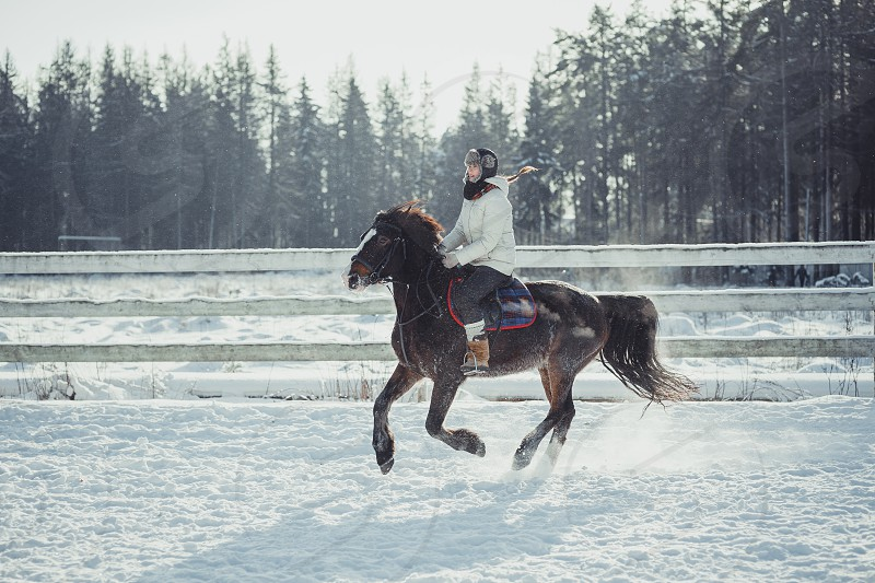 sport jump horse equestrian stable frozen woman equine outdoor Teenage girl horseback jumping cold  winter day  riding tournament  photo