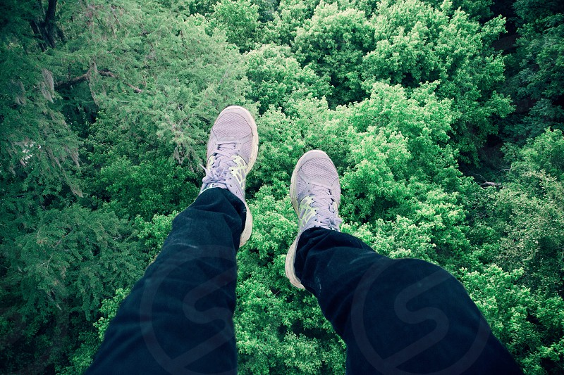 On top of the trees. photo