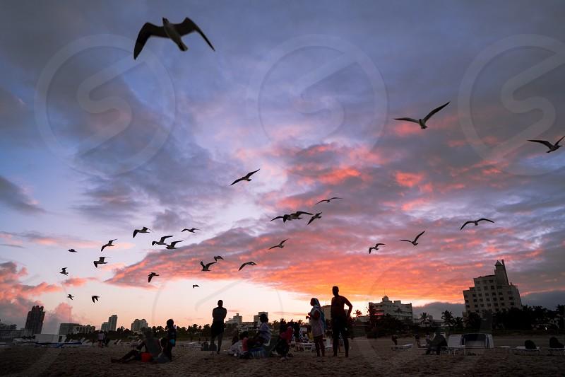beach,twilight,birds photo