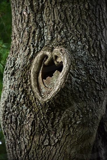 brown heart shape tree hole photo