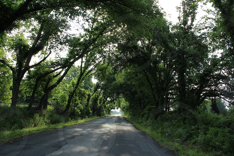 A shady country lane under an arch of trees meeting overhead. photo