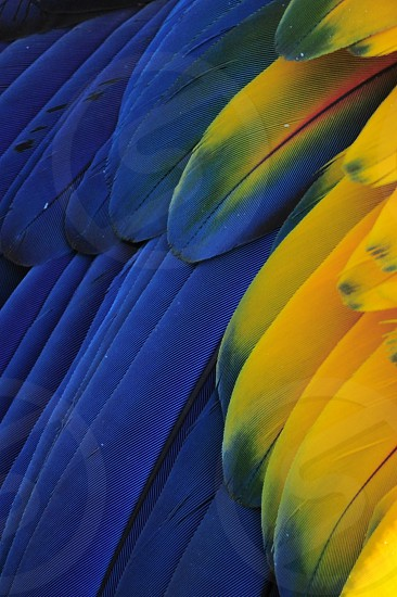 blue and yellow feathers photo