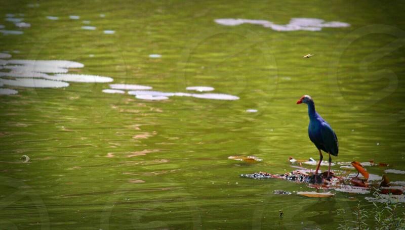 bird standing in river photo