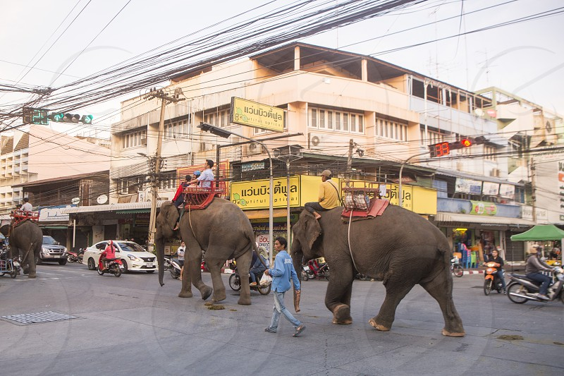 a thai elephant at a road in the city of Surin in Isan in Northeast Thailand.  Thailand Isan Surin November 2017 photo